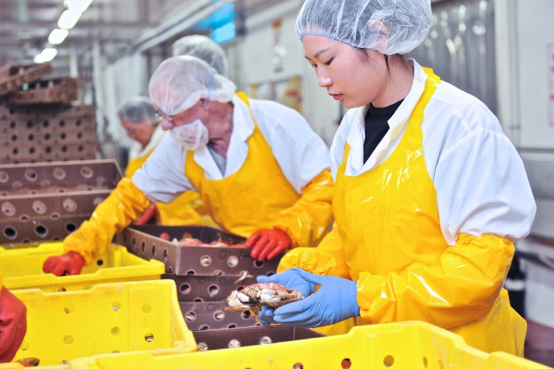 jonah-crab-processing-21