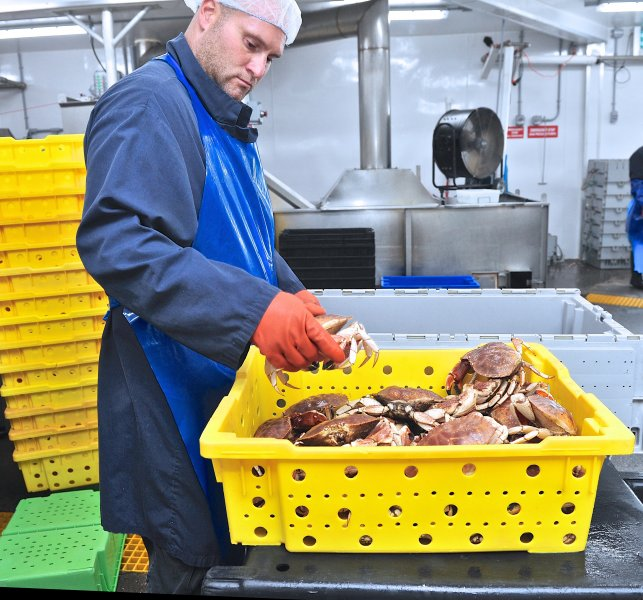 jonah-crab-processing-40