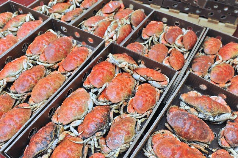 jonah-crab-processing-16
