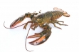 vf-lobster-june282016-273